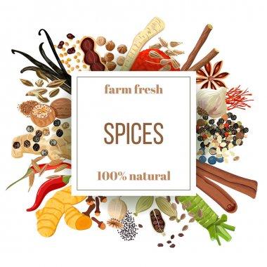 Culinary spices big set under squire emblem
