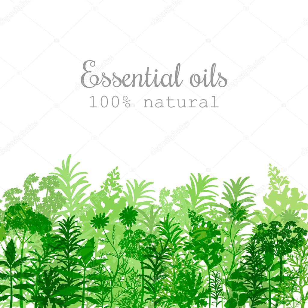 Popular essential oil plants label set in green color