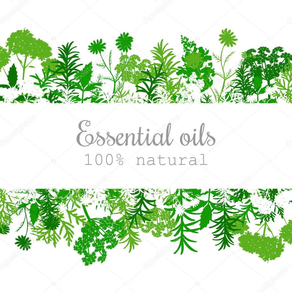 Popular essential oil plants label set in green.
