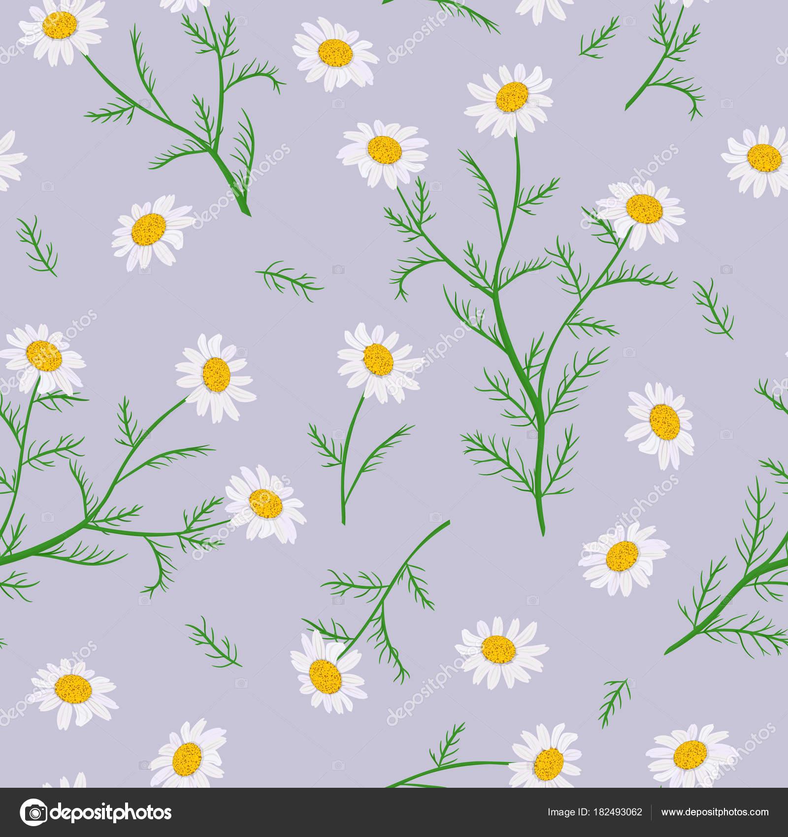 Daisy Flowers Seamless Pattern Vector Illustration Stock Vector