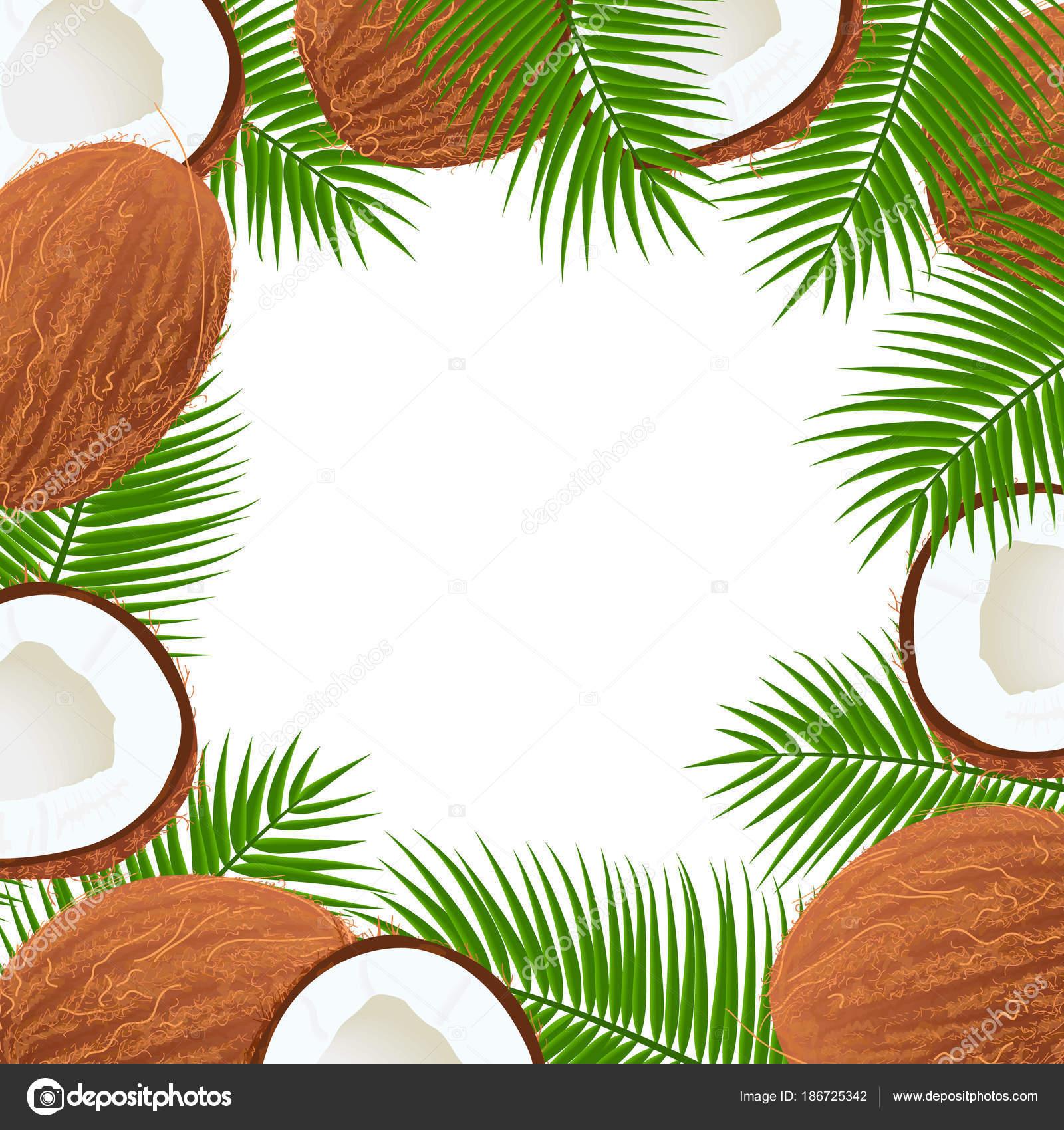 Palma de cocos maduros enteros y rajados hojas marco. Lugar central ...