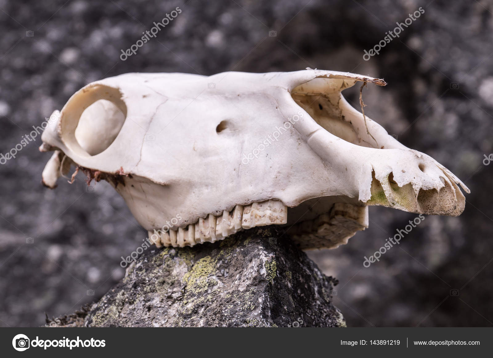 Horse Skull On A Rock In Mountains Stock Photo C Julianpetersphoto
