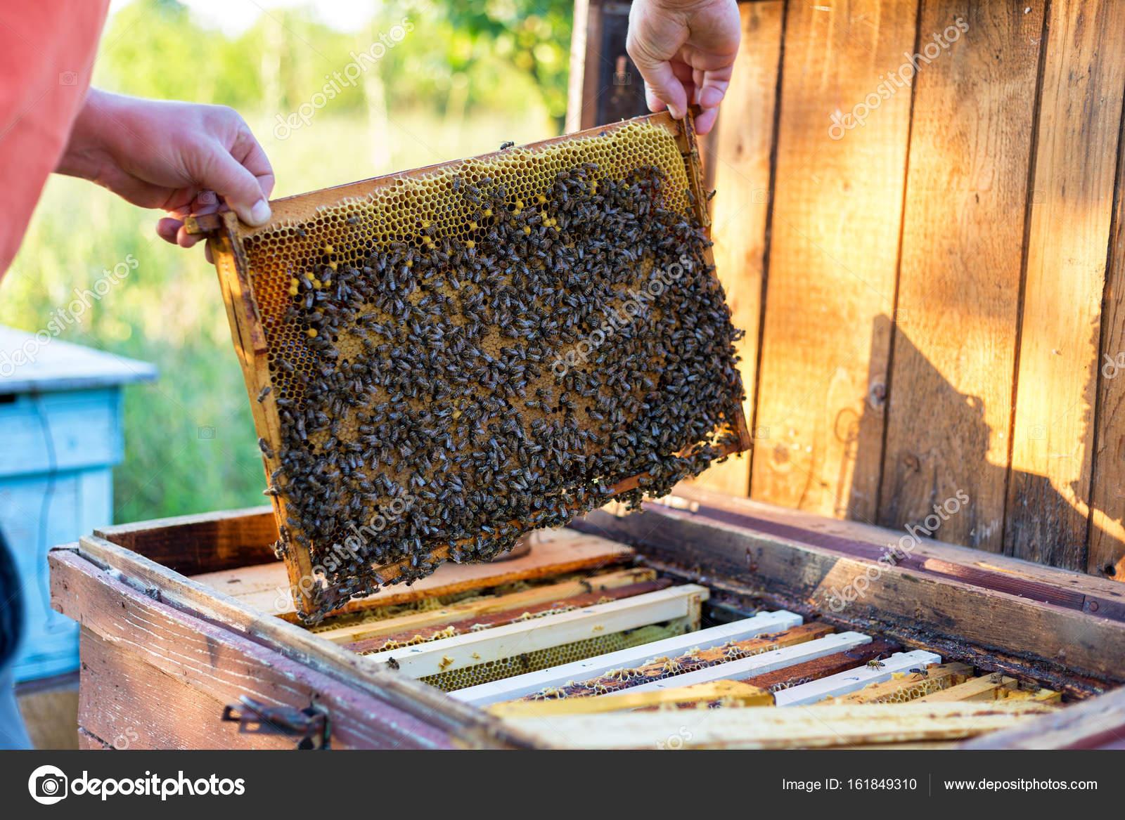 Mann hält Wabenrahmen für die Überprüfung der Bienen — Stockfoto ...
