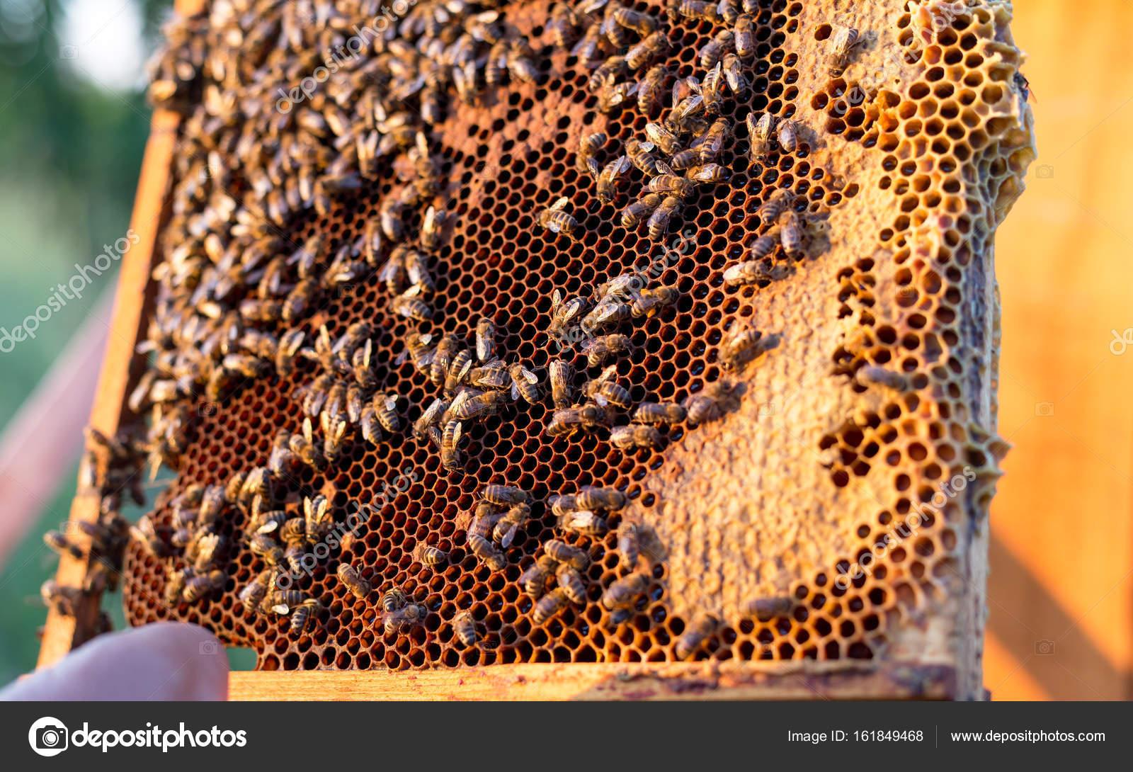 Waben-Rahmen mit Bienen und Honig für die Ernte — Stockfoto © radu ...
