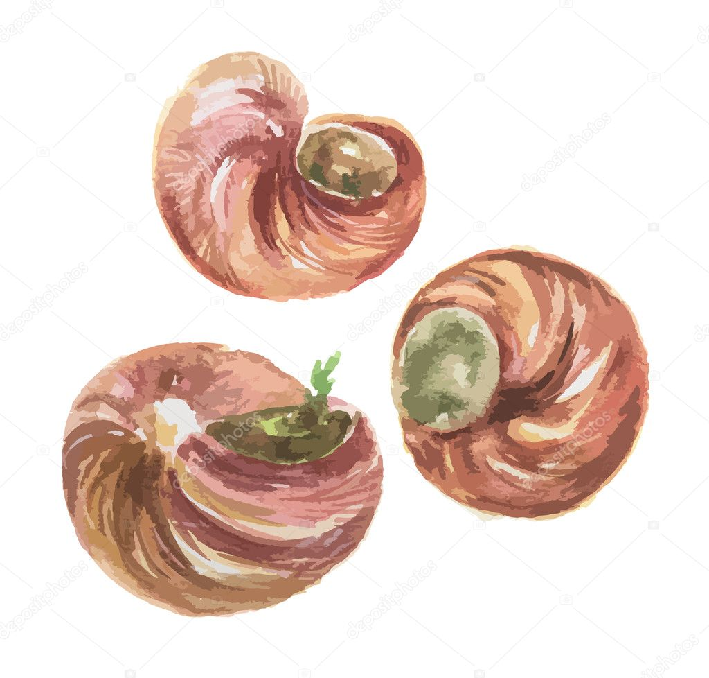 Isolated watercolor escargot.