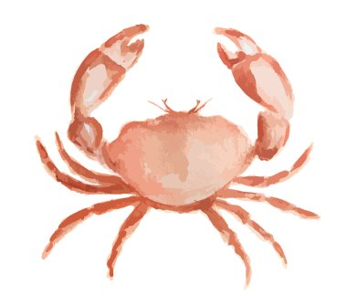 Isolated watercolor crab.