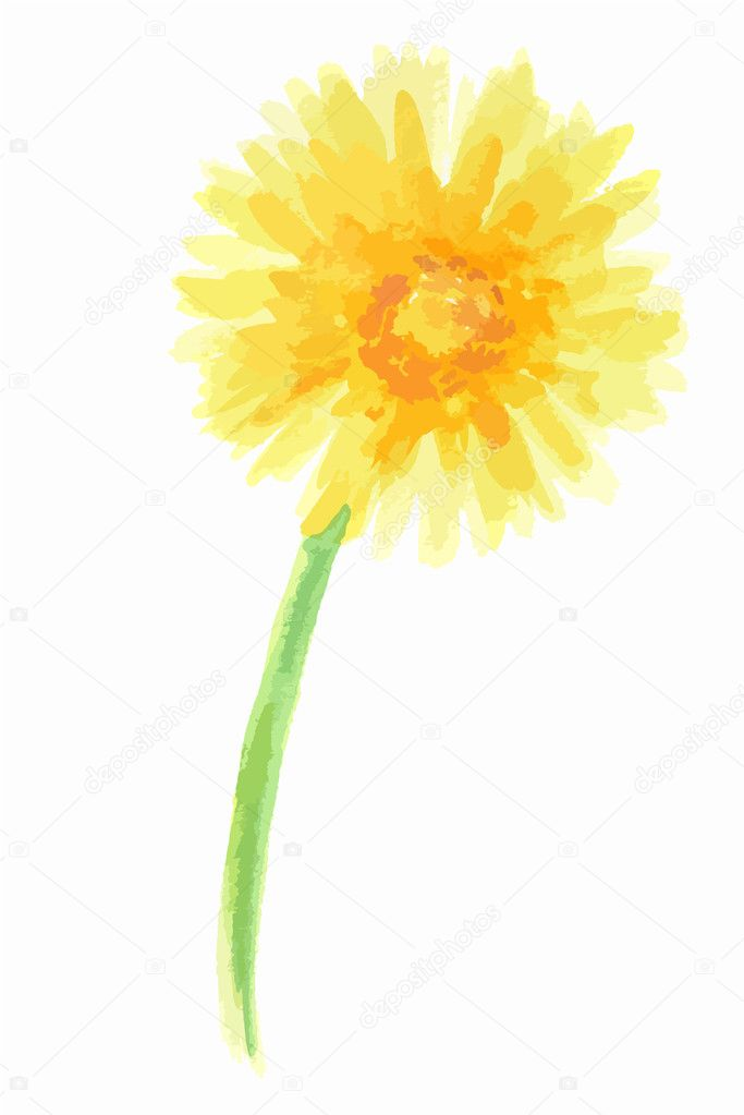 Isolated watercolor dandelion.