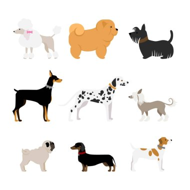 Isolated dogs set.