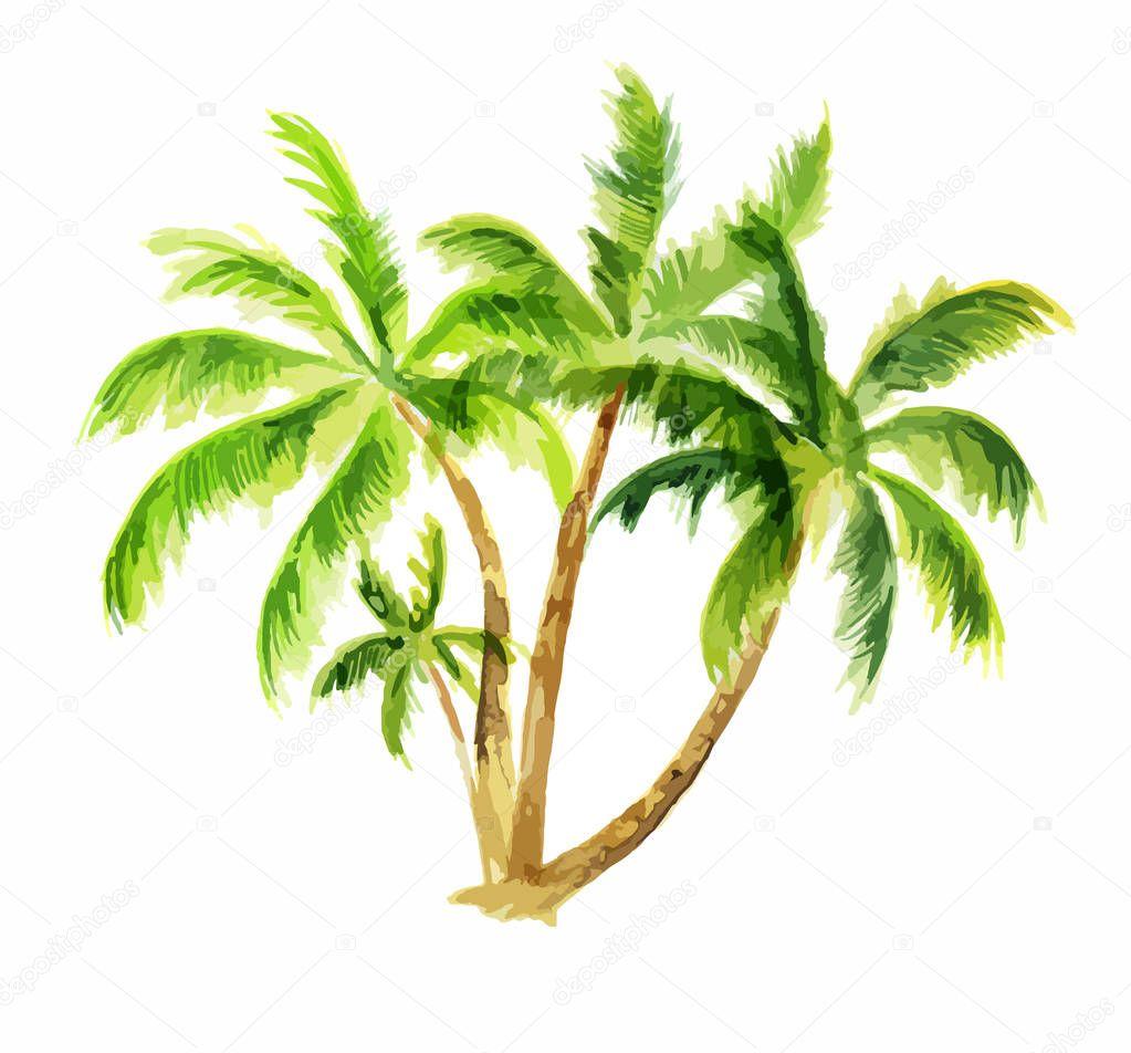 Watercolor palm set.