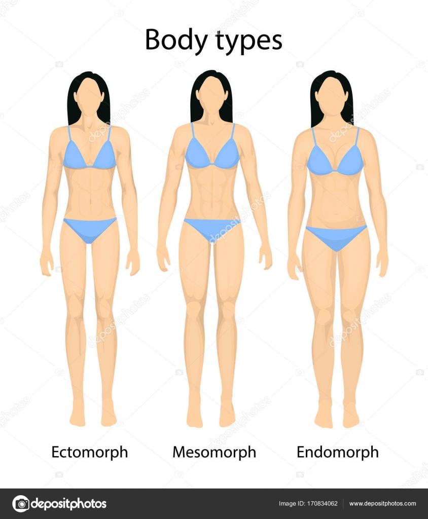 Áˆ Endomorph Body Type Stock Pictures Royalty Free Endomorph Images Download On Depositphotos Endomorph you have more body fat. https depositphotos com 170834062 stock illustration female body types html