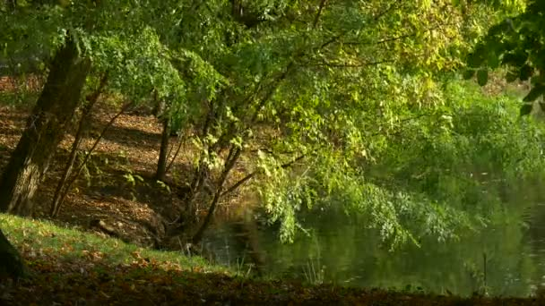 Fresh Green Trees Lake in Forest Windy Day Warm Sunny Autumn Summer Day Ripple on River Pond Watery Surface Branches Are Swaying at the Wind Outdoors