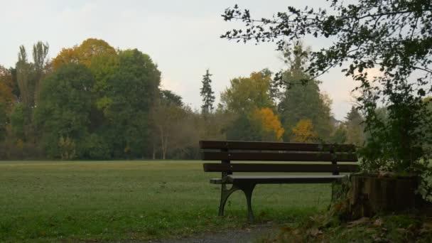Park v podzimní dřevěná lavice v zelené krajině přírody trávníku a barevné stromy korunuje zelené a žluté rostliny osamělost osamělost v pádu Cloudscape