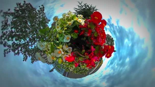 Kis apró Planet 360 fokos virágágyások fehér piros virágok virágzó imbolygott a szél táj felhőket lebeg a kék égen túra, Opole