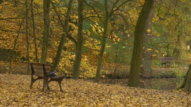 Lavička v parku u jezera podzimní krajina Park ulici, kde zlaté žluté listy padají pokrývá zem víkendy rekreace na povahu