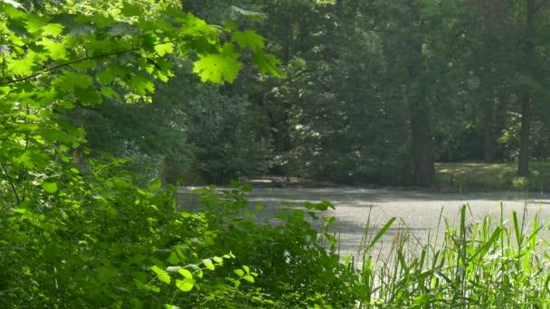 Odpočinek v uličce uprostřed lesa větve stromu javoru v Park čerstvé zelené stromy jsou kymácí ve větru ve slunečný letní den přírody je osvětlena Sluncem