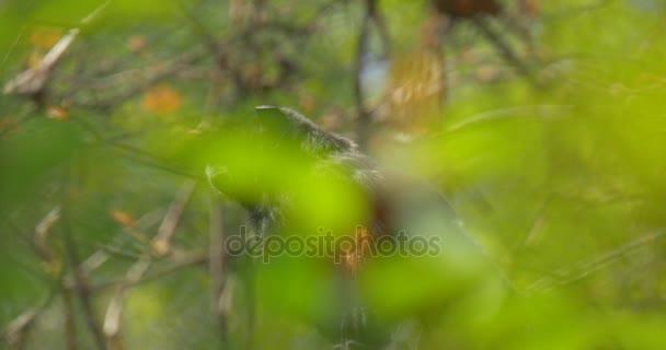 Majom néz ki ül között zöld fa hagy a dzsungel-kirándulás az állatkert természetvédelmi Wildlife biológia Állattani tanulmányozása állatok napsütéses nap