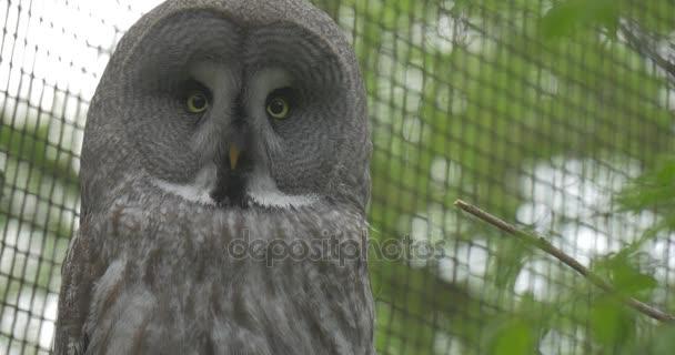 Šedá sova ve voliéře Zoo letní den zvířata pozorování venkovní výlet biologie zoologie ochrany životního prostředí divoké zvěře a přírody studovat