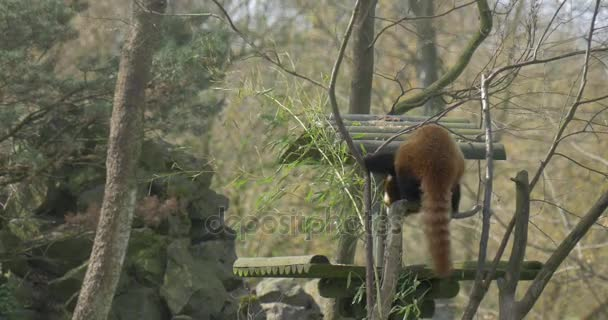 Back Little Panda on an Elevated Platform