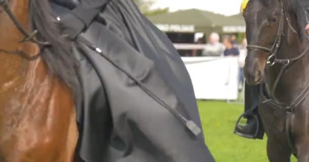 Ženy na koních drží biče dívky v černé šaty a rukavice Vintage jezdecké oblečení kavalérie na přehlídce v slunečný den na zelené louce diváci sledují