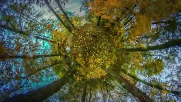 Mini bolygó Woodland őszi szeles napon 360 fokos levelek vékony fák korona van csapkodott, utazás a világ gyönyörű Tájkép Park vagy az erdő