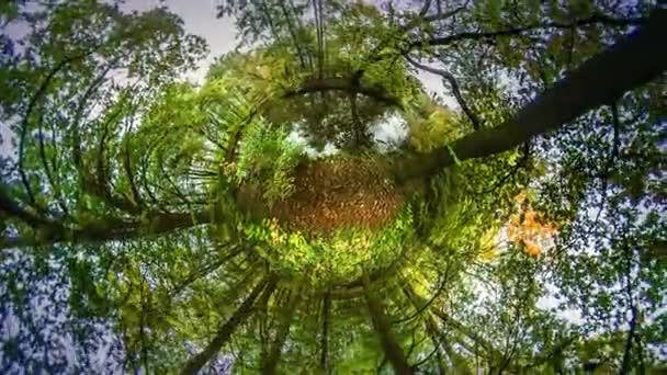 Jezero ve vlhké Park Mini Planet 360stupňových leteckého let chodit do lesa čerstvý vzduch dýchá rekreace cestování svět krásné podzimní příroda