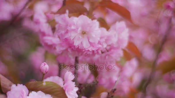 Young Leaves and Pink Flowers on Branches of Tree