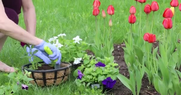 A young woman plants flowers in hanging pots. Gardening in the spring on the plot