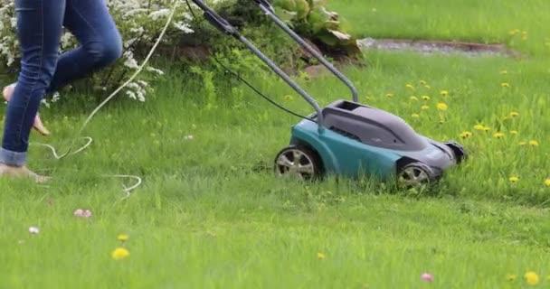 Muž seká trávu na trávníku sekačkou na pozadí červených tulipánů