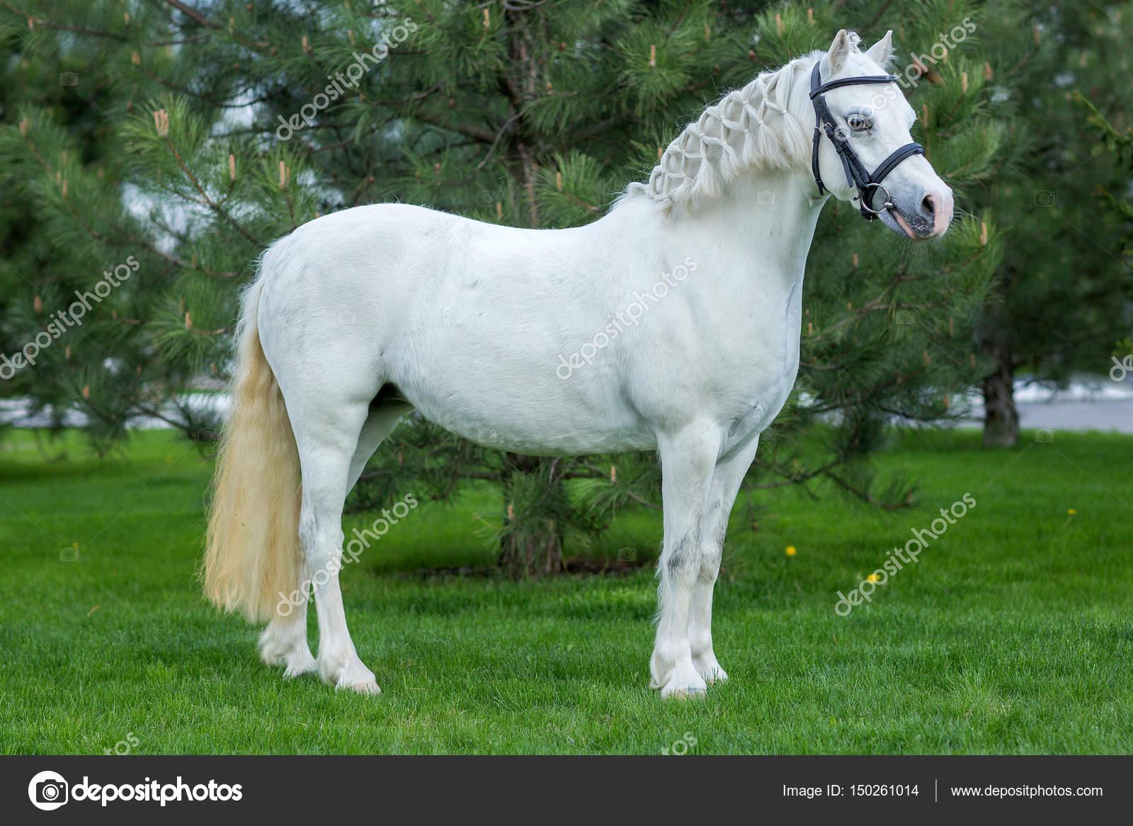 Beautiful White Horse Portrait At The Pasture Agaist Greenery Stock Photo C Sichkarenko Com 150261014