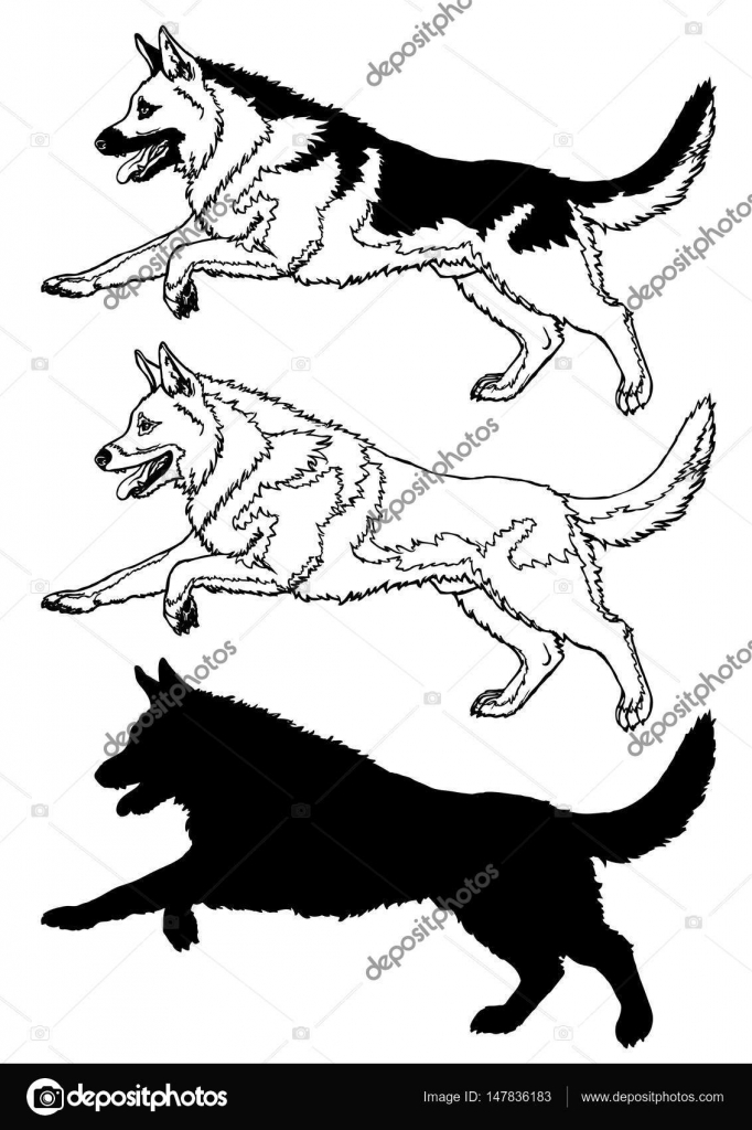 Contour Line Drawing Of A Dog : Running dog contour line on white — stock vector irbis