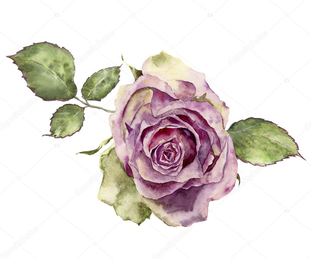 Watercolor Rose With Leaves Hand Painted Vintage Floral