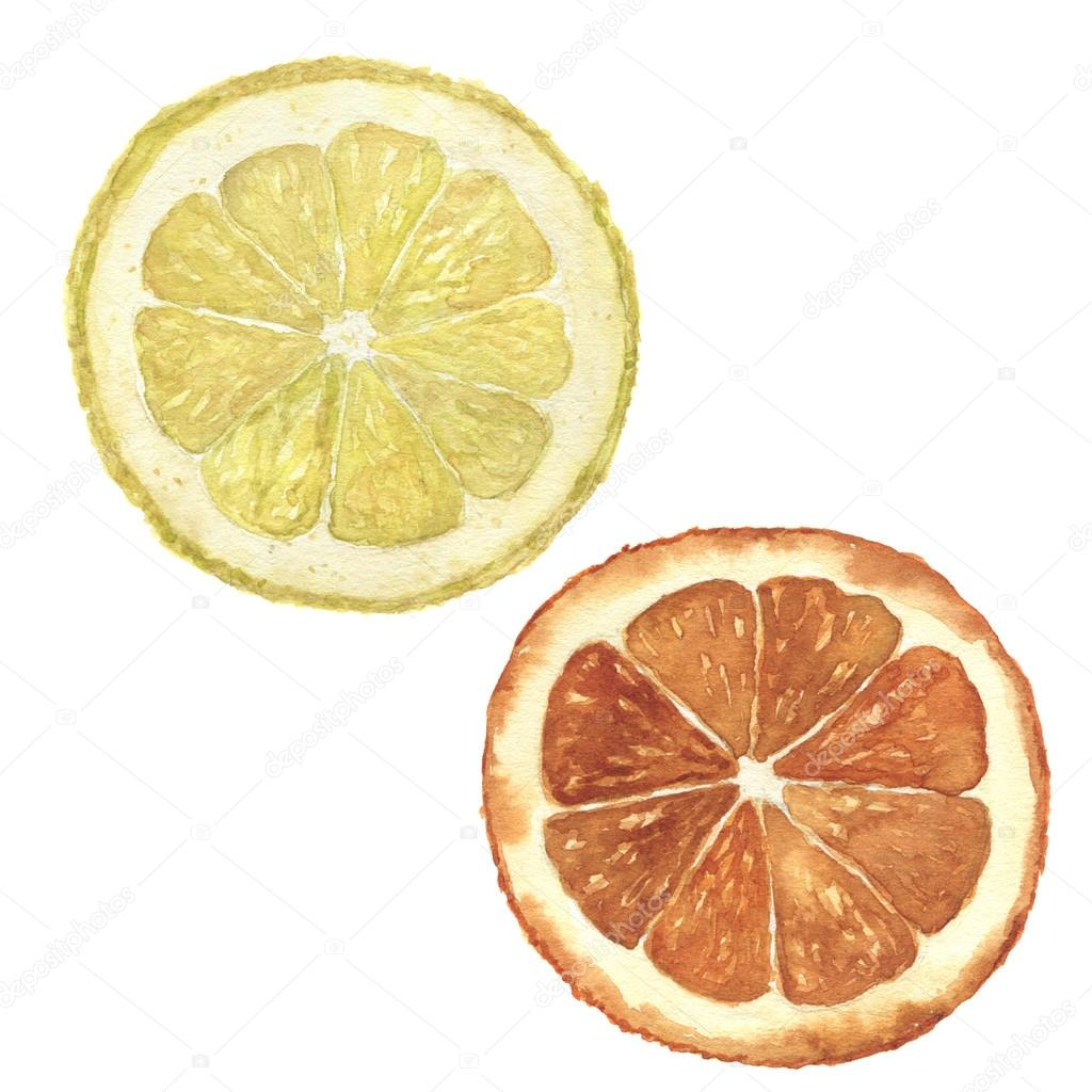 Watercolor Orange And Lemon Set Hand Painted Citrus Food Illustration Isolated On White Background Botanical For Design Photo By Derbisheva