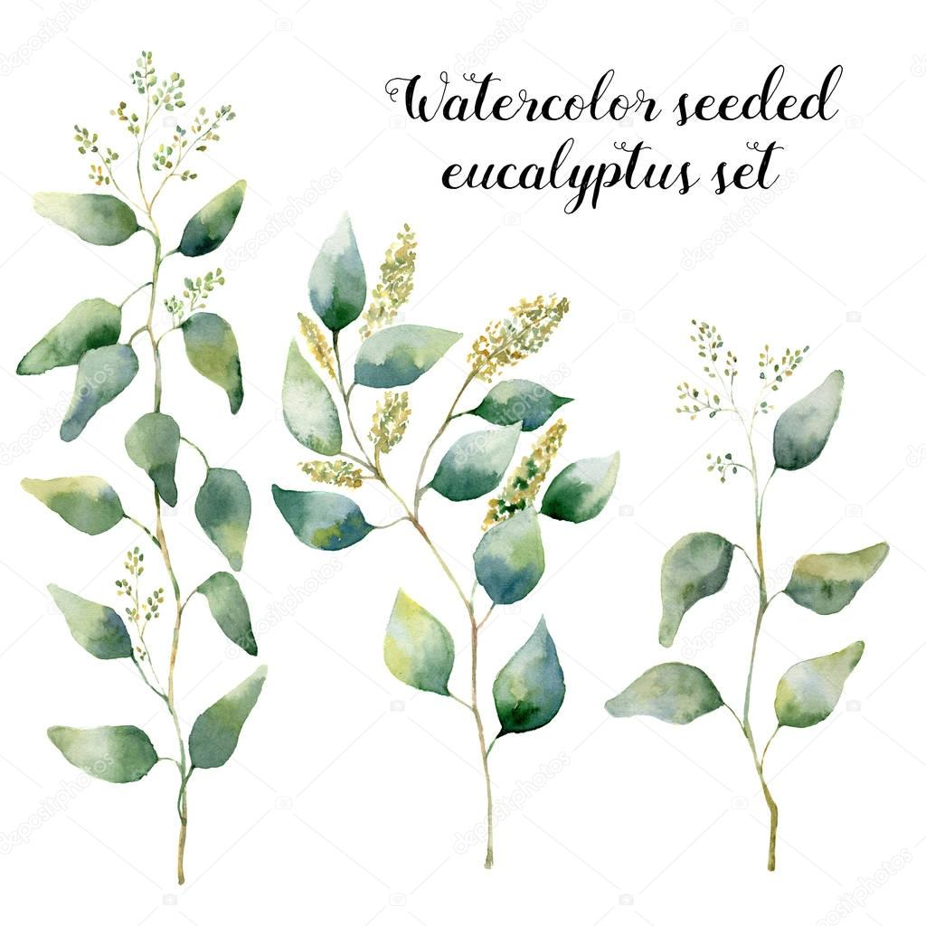 Watercolor seeded eucalyptus set. Hand painted floral illustration with silver leaves and branches isolated on white background. For design, print and textile.