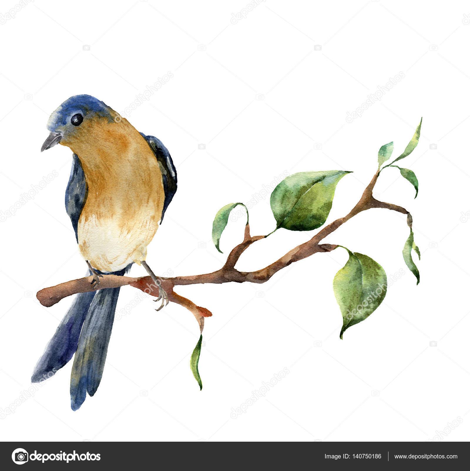 Aquarelle oiseaux assis sur une branche d arbre avec des - Primavera uccelli primavera colorazione pagine ...