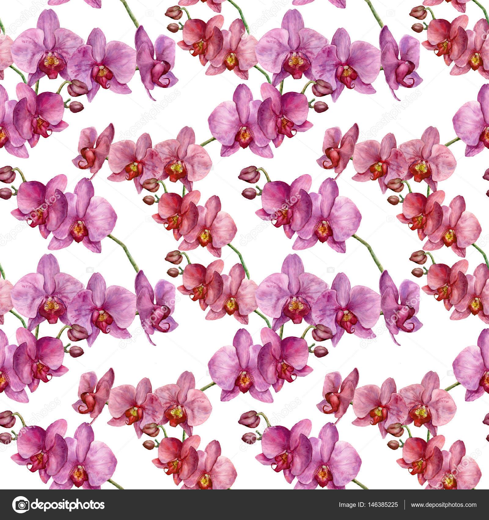 Sulu Boya Dikişsiz Desen Orkide Ile El Boyalı çiçek Bo Stok Foto