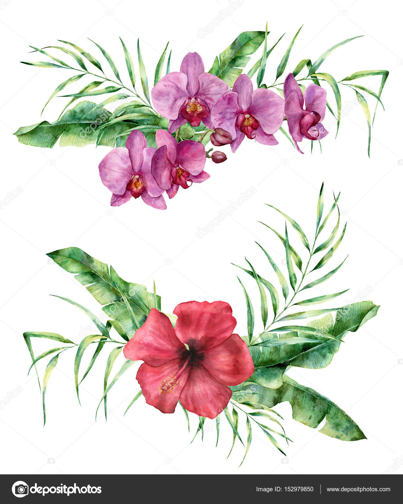Watercolor floral composition with exotic flowers and leaves. Hand ...