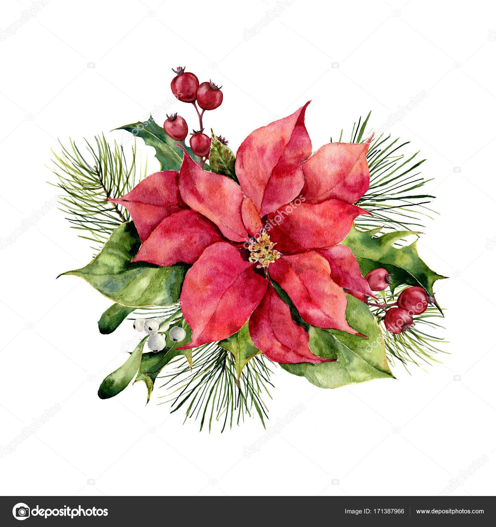 Stella Di Natale Bianca.Stella Di Natale Dell Acquerello Con La Decorazione Floreale Di