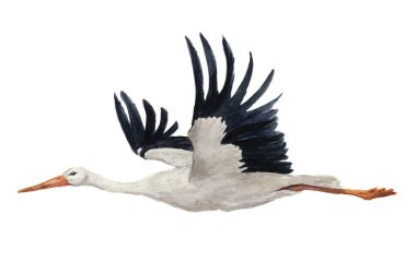Watercolor flying white stork. Hand painted ciconia bird illustration isolated on white background. For design, prints or background