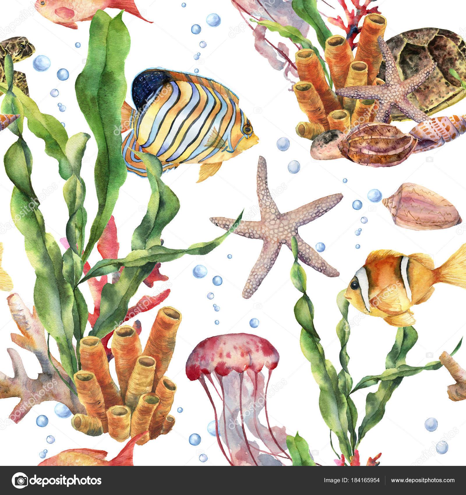 Sulu Boya Dikişsiz Desen Laminaria şubeler Mercan Resif Ve Deniz