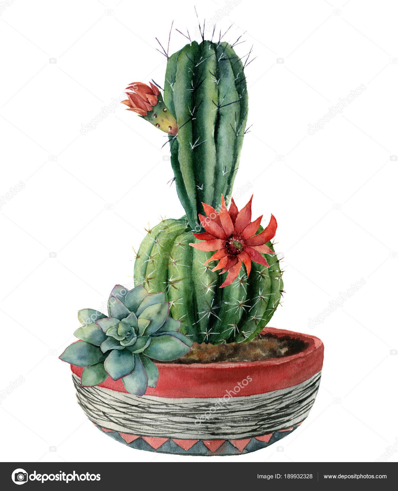 Tarjeta acuarela verde cactus y flores en una maceta. Pintado a mano ...