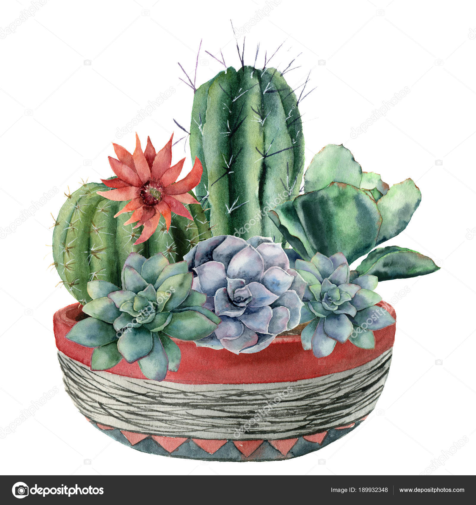 Cactus de acuarela con suculentas en una olla. Pintado a mano de ...