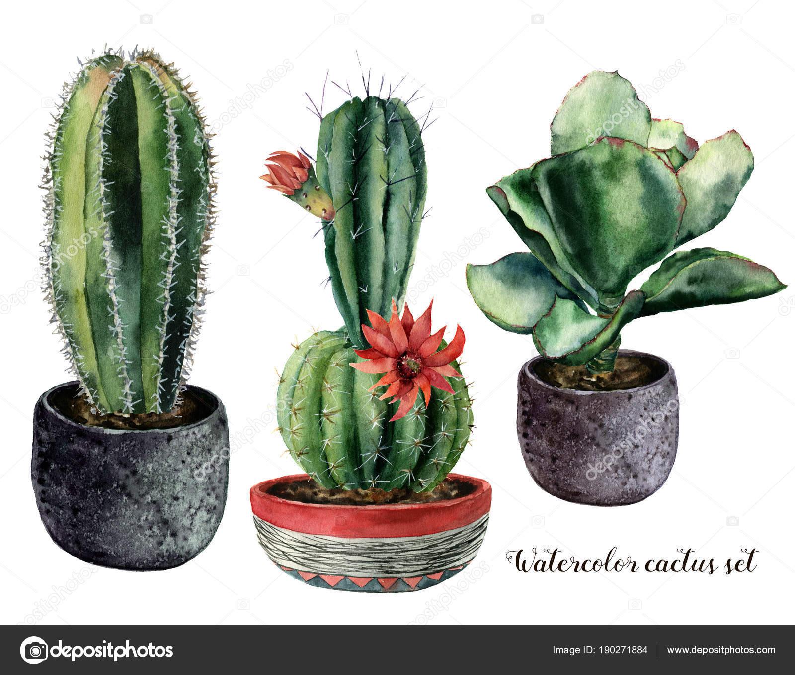Acuarela con cactus y flores en una composición de pote. Pintado a ...
