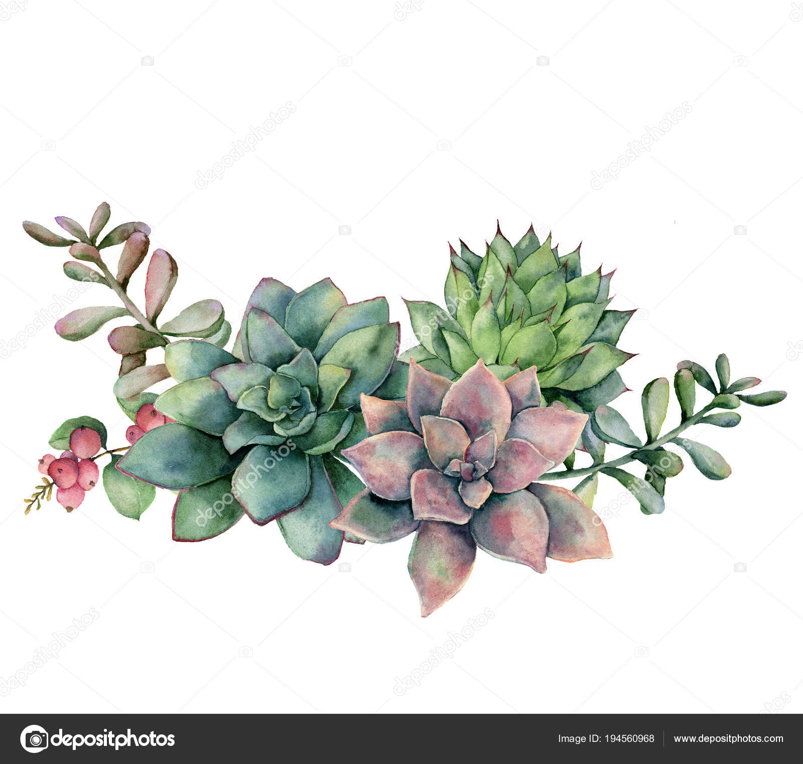 Watercolor Succulent Bouquet With Berries Hand Painted Green And Violet Flowers Branch And Red Berries Isolated On White Background Floral Illustration For Design Fabric Print Or Background Stock Photo Image By C
