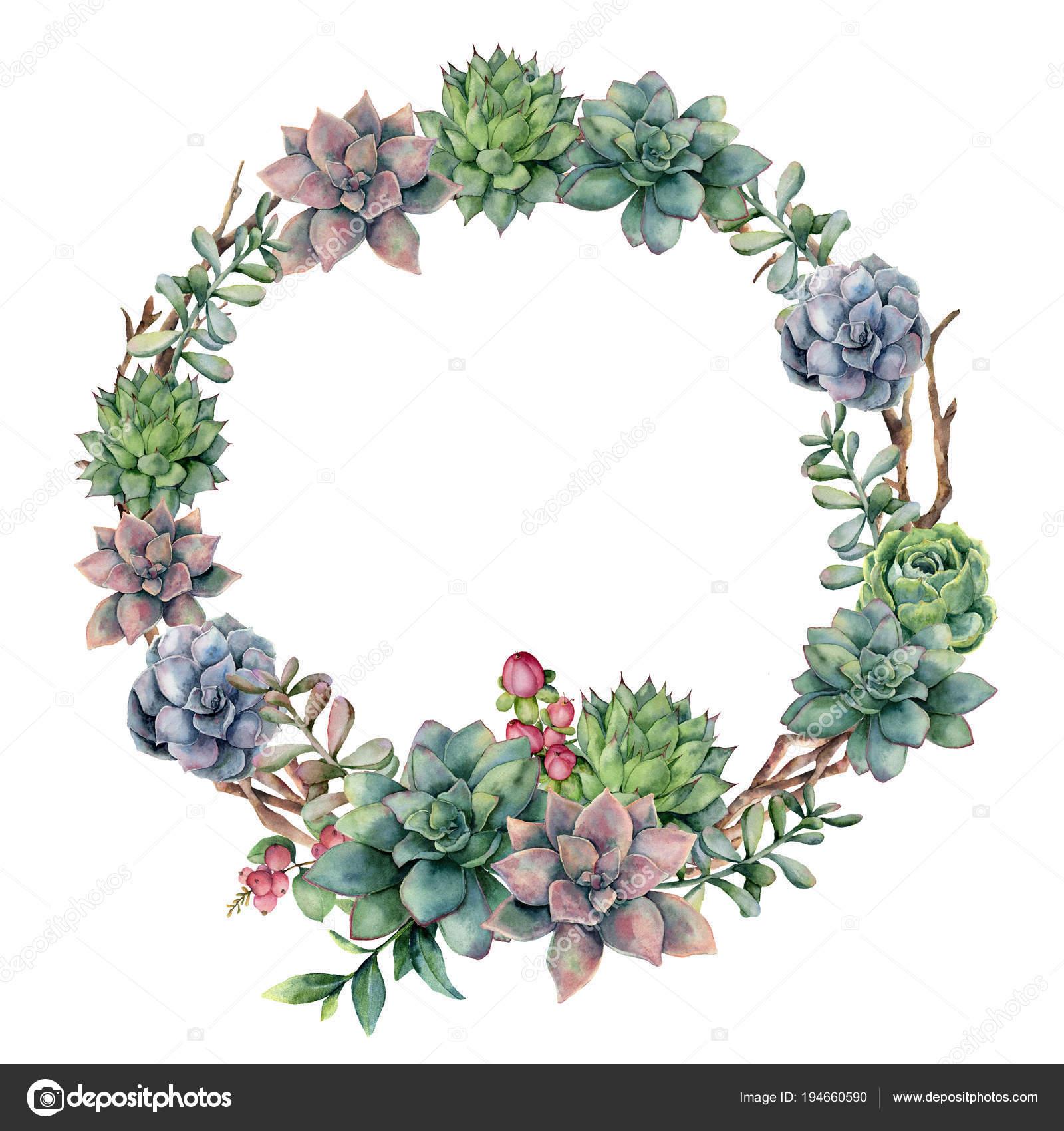 Pictures Eucalyptus Varieties Watercolor Succulent And Berries Wreath Hand Painted Succulent Red Berry And Eucalyptus Leaves On White Background Floral Illustration For Design Print Fabric Or Background Stock Photo C Derbisheva 194660590