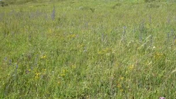 Divoká tráva. Tráva je smíšené. Letní slunečný den