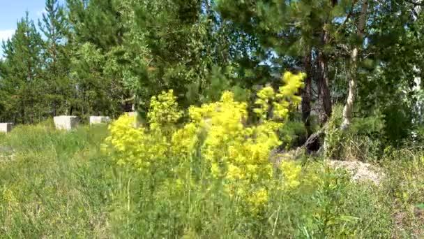 Divoká tráva. Tráva je smíšené. Letní slunečný den.