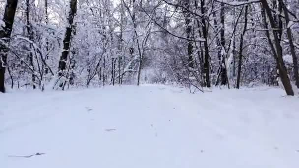 Zasněžený zimní les. Letí přes lyžařskou stezku uprostřed lesa. Sněhem pokryté větve stromů. Rozpětí mezi stromy na drátě.