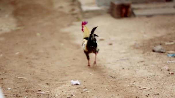 Sfondo di natura stretta di Gallo