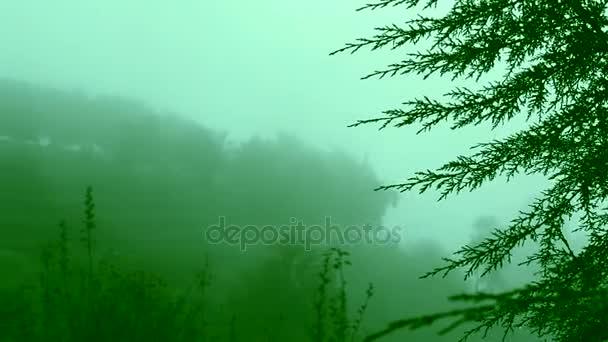 Mlha, pohybující se po redwood stromy na horách