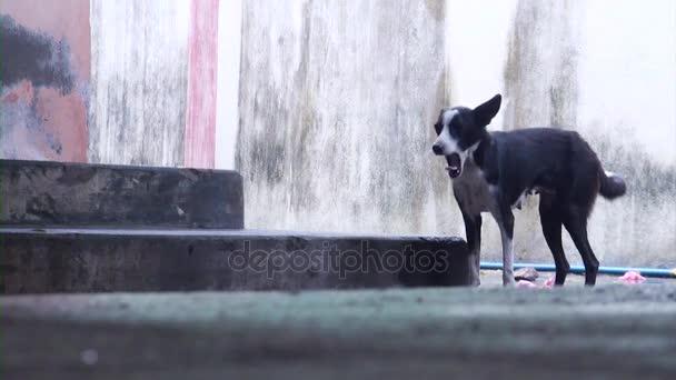 Osamělý Black Dog, vtipné momenty